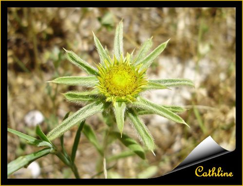 a-identifier-4--fleur-jaune.jpg