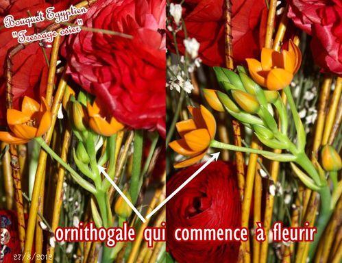 2012 03 27 bouquet egyptien 4