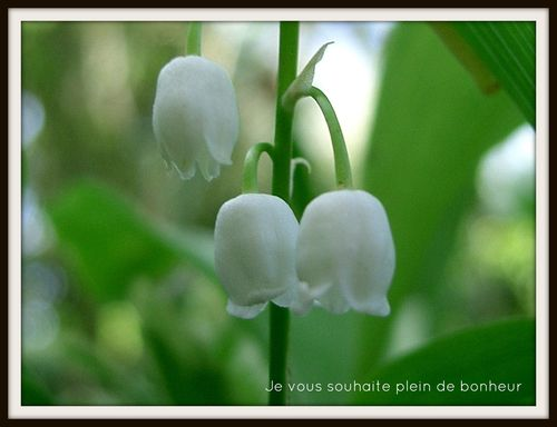 Clochette de Muguet-copie-1