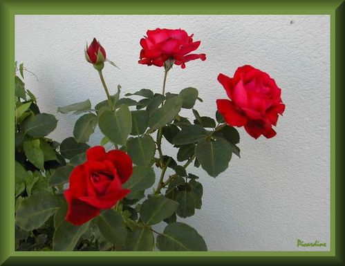 cadre roses rouges pinprenelle