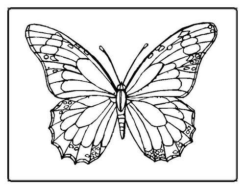 papillon02.jpg