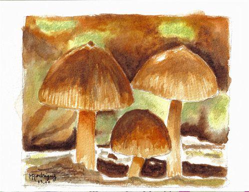 champignons.jpg