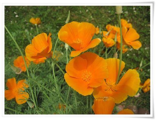 03_FleursETE-06--copie-1.JPG