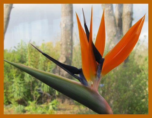oiseau-de-paradis.jpg