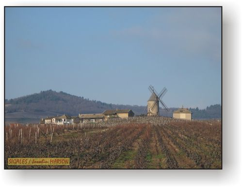 39H moulin a vent vignoble