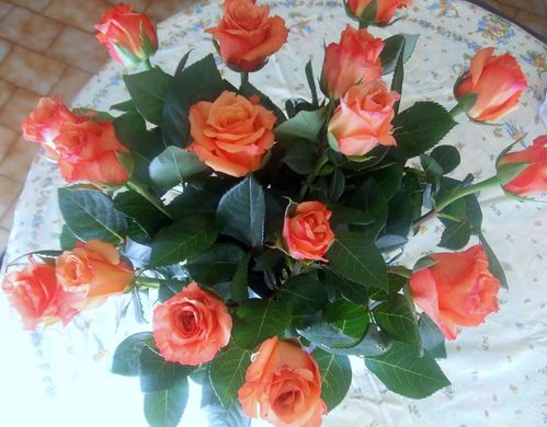 mes roses 003