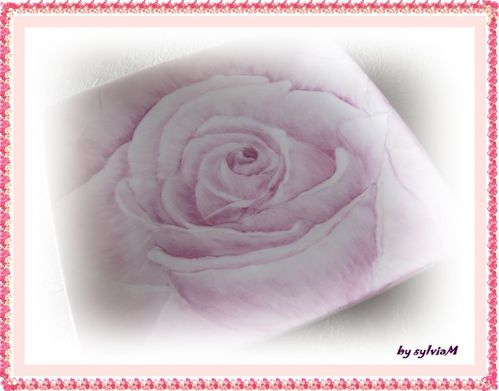 coupelle rose