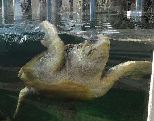 tortues-marineland.jpg