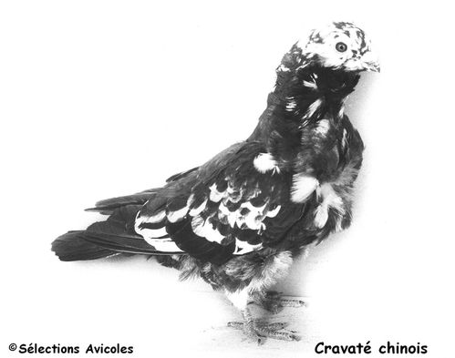 Cravate chinois 3
