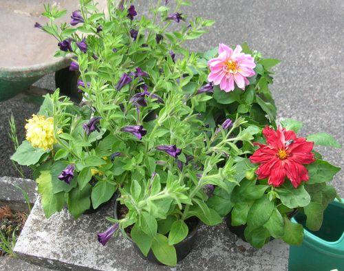 Fleurs-au-jardin-004.JPG
