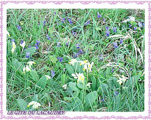 DES-VIOLETTES-ET-DES-COUCOUS--31-MARS-2012.jpg
