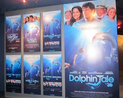 Dolphin tale (14)