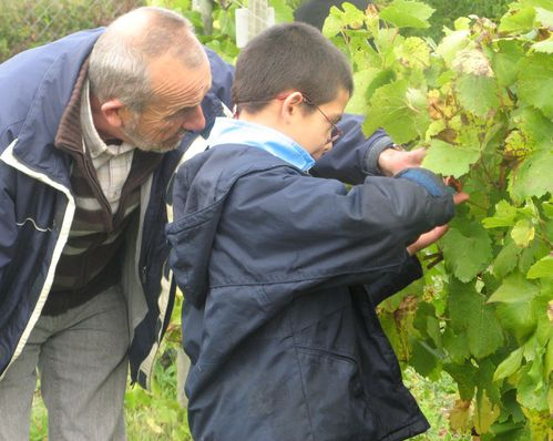 vendanges apprenti vigneron