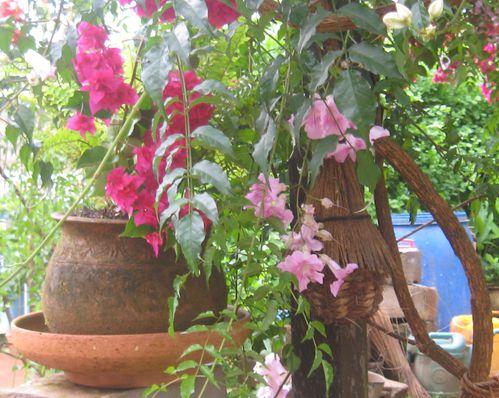 nouveau-jardin 5295