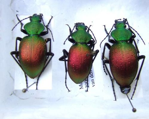 INSECTES-MAES.jpg