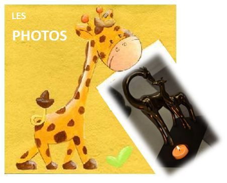 Girafe-photos.jpg