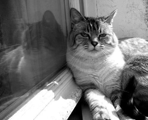 photo-chat-capucine-blog-lola-divine-trentaine-overblog-mir.jpg