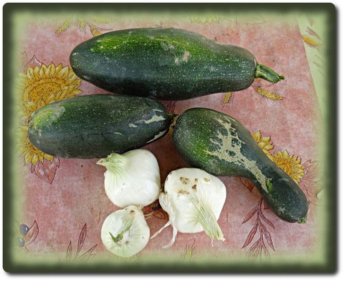 premieres-courgettes-2011.JPG
