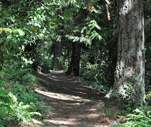 714px-Tryon-marshall_forest_path.jpg