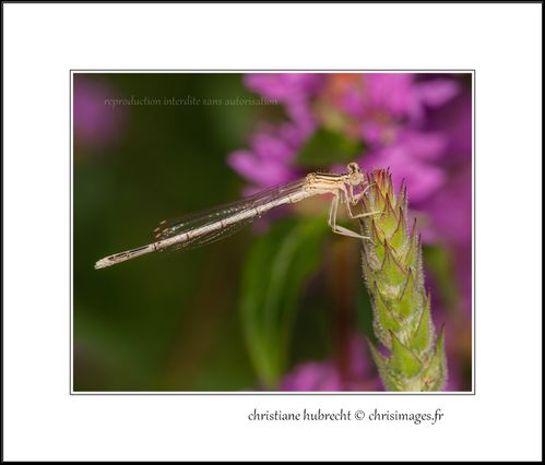 Insectes-9185-1280.jpg