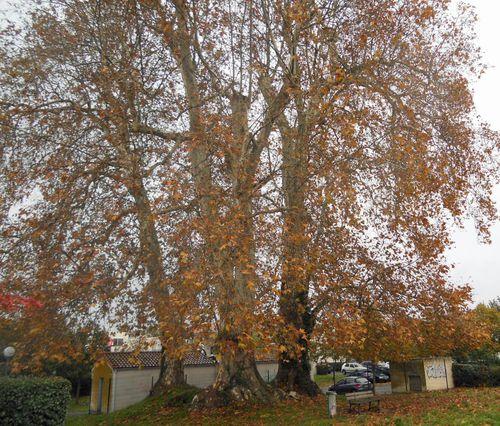arbre-lotissement-Bonnardel-009.JPG