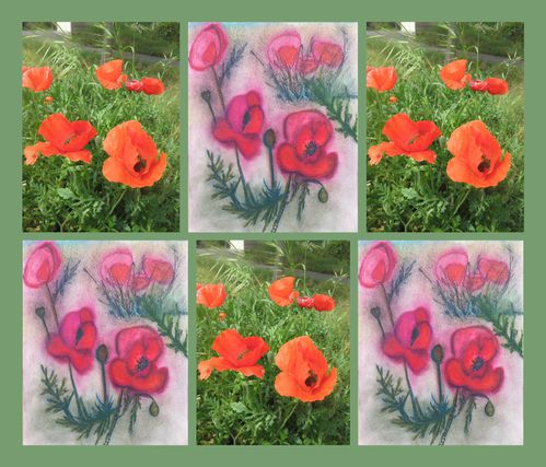 Coquelicots2