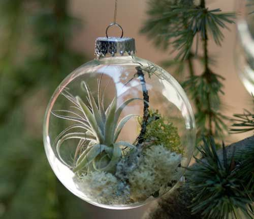 christmas-tree-ornaments-with-living-plants-1-copie-1.jpg