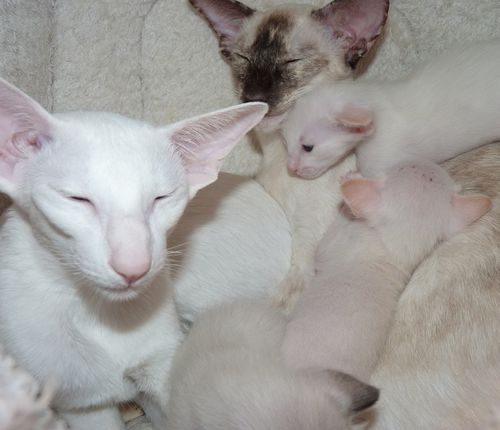 3w-Fasty-and-her-two-litters--2-.jpg