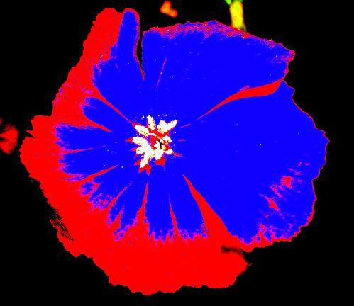 fleur-1.jpg