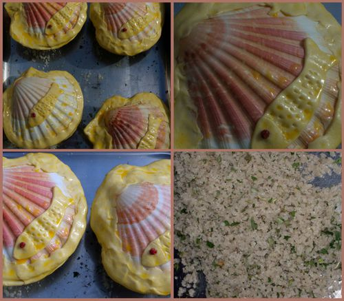 coquilles 2