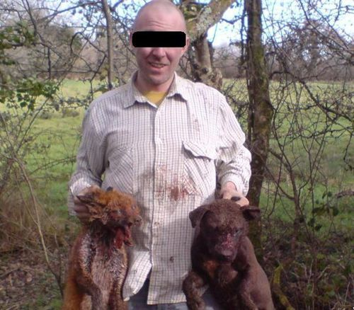 Irish terrierman with injured fox and dog