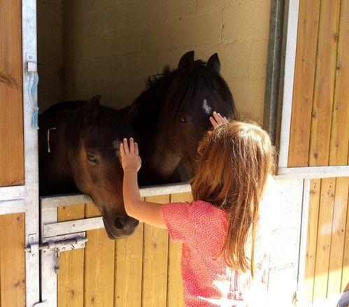caresse-chevaux.jpg