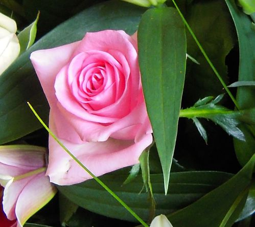 fleurs du 30.mai1
