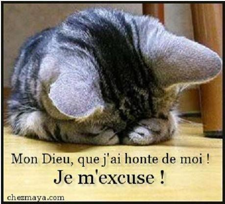 CHATS-YEUX-CACHES.jpg