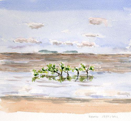 Paletuvier-Kourou-Guyane.jpg