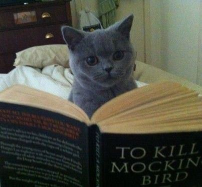 photo-marrante-chat-lecture.jpg