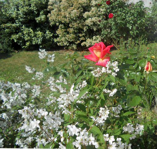Un jardin pour le j dedame mauve margaux33brigit08 for Alexandre jardin mes trois zebres