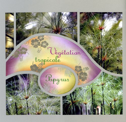 vegetation-tropicale.jpg