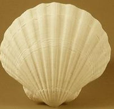 coquille_st_-jacques_.jpg