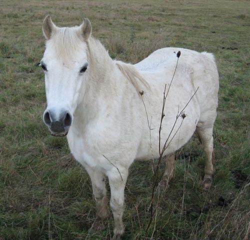 cheval-blanc-1-1-.jpg