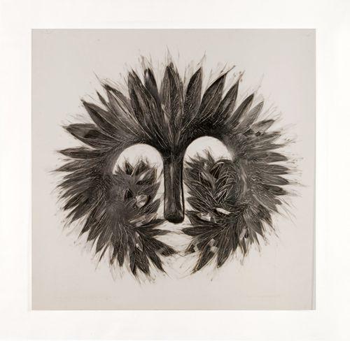 Milton Becerra-Phacelia Tanacetifolia
