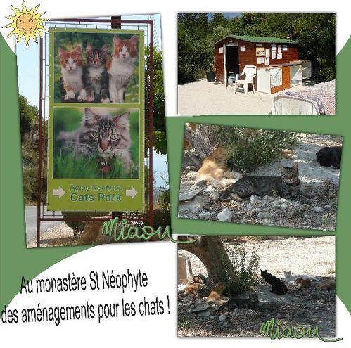 st-neophyte_cats-park.jpg