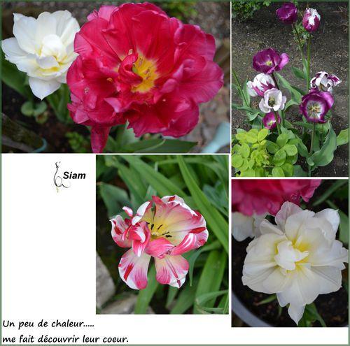 Tulipes-pour-blog-2.jpg