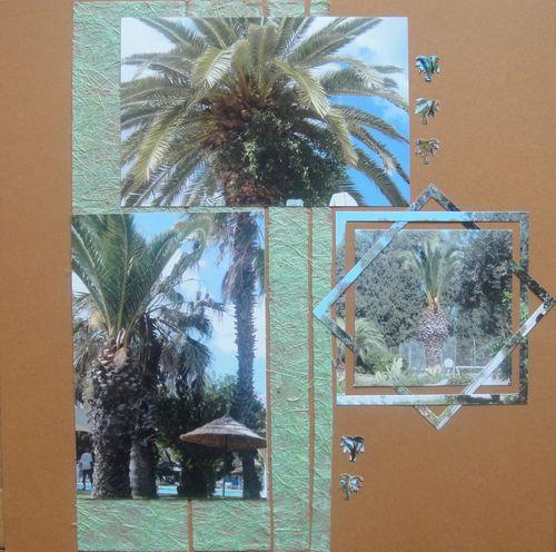 Tunisie:palmiers