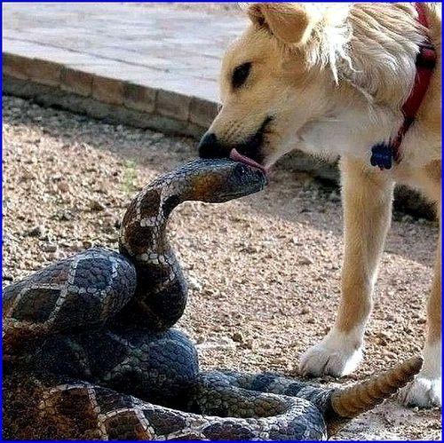 chien serpent s