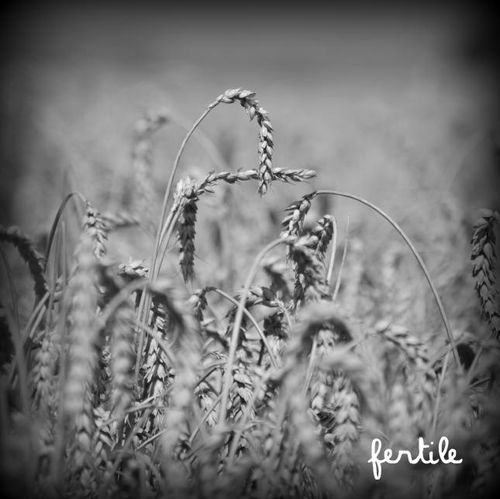 05 fertile