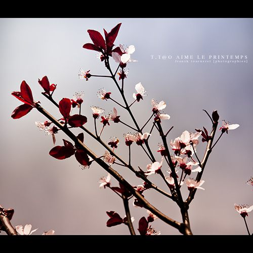 tt@o aime le Printemps - Franck Tourneret - Photographe - A
