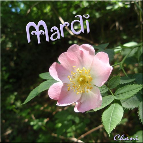 carte-imprimer-chani-message-mardi