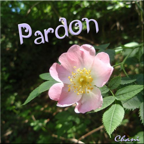 carte-imprimer-chani-message-pardon