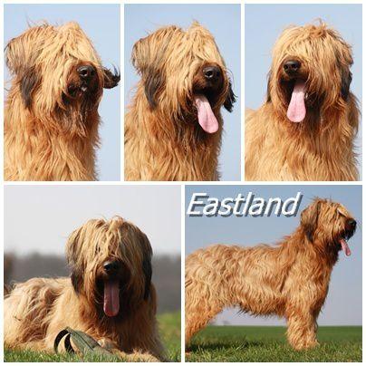 Eastland montage